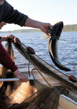 Muu kalastuslupa kuva